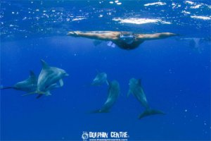 swimming-amongst-dolphins2