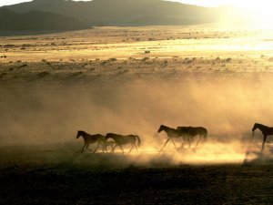 A herd of wild horses on the move. (Photo by Cheryl Korff, via Panoramio)