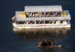 shearwater cruise boat