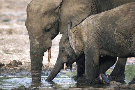 The recent arrests of six suspected poachers on a vast wildlife reserve in Mozambique are seen by conservationist as rare good news in a country that long viewed as lacking the will and resources to stem the slaughter of elephants and other species under threat. Associated Press