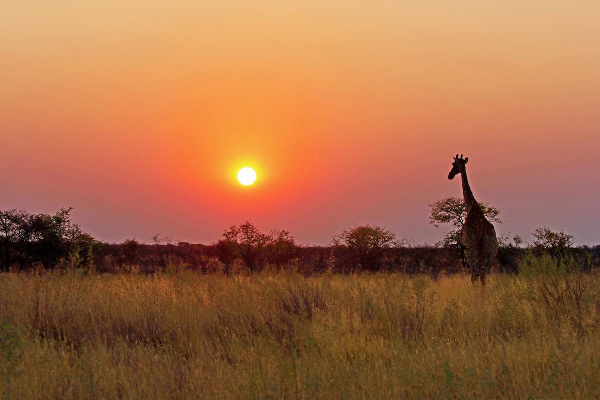 A giraffe at sunset in Etosha National Park.