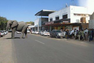 Elephants on the Main Street of Vic Falls