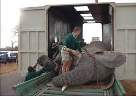 elephant relocation
