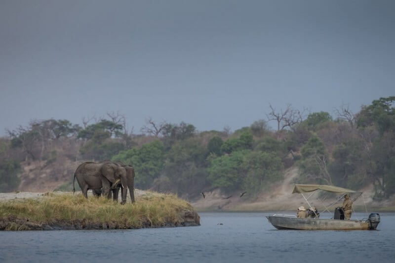 Elephants from a boat cruise on the Chobe River ©James Suter